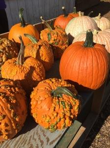 Pumpkins at Comus Market.